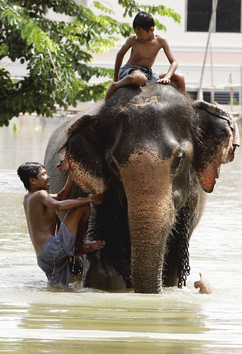 Niños de Ayutthaya en elefante
