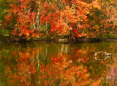 Fall on the Huron River (Kathy~) Tags: red reflection tree fall water river leaf bush hp berry michigan annarbor arbor huronriver ann cw stick hudsonmills photofaceoffwinner pfogold challengew