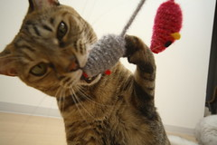 IMG_2878 (junku) Tags: cats cat canon eos kitten sigma kitties 5d 猫 kin ねこ ネコ canoneos5d sigma1224mmf4556exdgasphsm eos5d