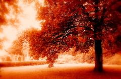 Y goeden - The tree - Llandyfriog (brynmeillion - JAN) Tags: tree wales bravo quality cymru ceredigion coeden magicdonkey thecontinuum outstandingshots llandyfriog outstandingshotshighlight ci33 anawesomeshot thegoldenmermaid