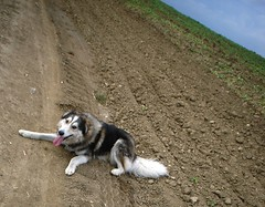 Shy is having fun. (MiaRossy) Tags: dog happy shy