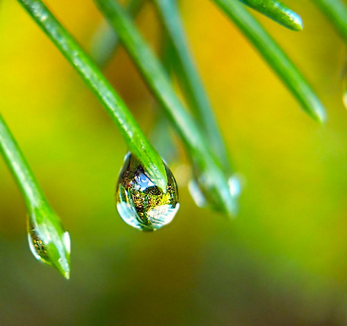 Shiny Droplet