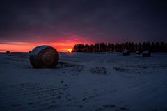 Golden Hour (swanhetmanczyk1) Tags: sunrise dusk canada alberta outdoor clouds field nikon d7100