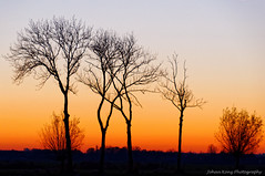 Dutch savanna (Johan Konz) Tags: brilliant sunset orange red sky rural road trees outdoor landscape field serene atmosphere nikon d90 dusk purmerland waterland netherlands tree