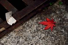 RED #2 (Sign-Z) Tags: red leaf nikon d600 afsnikkor28300mmf3556gedvr 28300mmf3556gvr 赤 葉