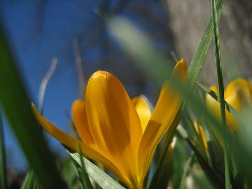 Sharing Spring