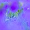 _4170379 (omj11) Tags: fleurs flou carré couleur