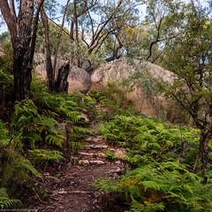 the path to turtle rock (andrew.walker28) Tags: ferns path track turtle rock girraweennationalpark landscape rocks granite belt