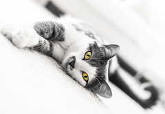 Luna (Alberto Vanoli) Tags: eyes catsdogs bokeh animals bw photo pet white