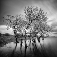 Colliford Trees (Timothy Gilbert) Tags: bodminmoor ultrawide wideangle m43 microfourthirds lumix laowacompactdreamer75mmf20 collifordlake panasonic cornwall gx8 longexposure