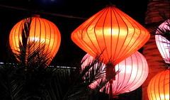 Lamp (Khaled M. K. HEGAZY) Tags: nikon coolpix p520 singapore flowerdome indoor closeup lamp lantern palm tree foliage silhouette white orange pink black