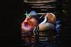 Mandarin (JayPiDee) Tags: aixgalericulata anatidae bigma ente entenvögel hamburg mandarinduck mandarinente nsgraakmoor sigmadg50500mm4563apohsm vogel vögel anatra bird duck deutschland