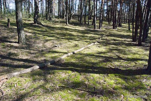 Волинський ліс InterNetri Ukraine 1521133358