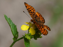 20180516-130637-00052.jpgCO (hugoholunder) Tags: blüte nektar blätter