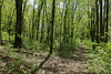 Forest path (danielhast) Tags: madison wisconsin lakeshore preserve tree forest path footpath