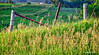 Farmland Fence_187052 (rjmonner) Tags: fence post woodpost farm farmland wire brace contour corn iowa jacksoncounty barbed barbedwire grasses farming agricultural agronomy agriculture agronomic contourfarming land country lean leaning roadside gate