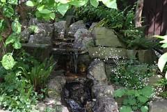 Panorama1 (nollynutkins) Tags: rockery stone waterfall ferns water leaves londonpride saxifraga saxifraga×urbium green