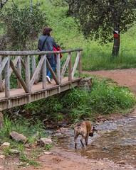 ¿Quién necesita un puente? (Guillermo de Baskerville) Tags: parque natural paseo rivera