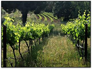 Vinyes del Bruguer, Santa Eulàlia de Ronçana (el Vallès Oriental)