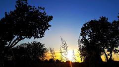 Nyáresti árnyak (Ják) (milankalman) Tags: shadow evening sun tree grass summer