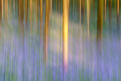 Bluebell ICM (jactoll) Tags: woottonwawen warwickshire austywood spring bluebells woodland icm sony a7iii sony2470mmf28gm light abstract jactoll