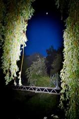 Willow curtains (Mount Fuji Man) Tags: dark sky moon willow bridge pipeline night