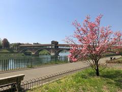 (Paolo Cozzarizza) Tags: italia lombardia pavia scorcio ponte alberi fiori panchina prato acqua