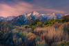 Grandeur (Exploring Light) Tags: mountain sage fall autumn sunrise lonepine peak purple blue pink sierras easternsierras california chrismoore exploringlight photography fineart landscape prints limitededition sierramountains2017