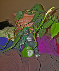Godzilla vs Philodendron-lante - Godzilla on Mt. Laundry (Tim Evanson) Tags: godzilla godzillaonmountlaundry godzillaonmtlaundry mtlaundry mountlaundry