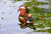 LOVELY POSE (GA High Quality Photography) Tags: animal nature beauty beautiful love happy cute summer art fun amazing stunning photography wildlife new popular domesticanimal