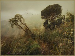 "from the series ""Walks in Italy"". A foggy day in Castelmola. (Sicily) (odinvadim) Tags: mytravelgram iphoneart iphone iphoneography iphoneonly specialist snapseed textures painterlymobileart travel artist textured landscape"