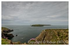 View of Skomer Island from Headland Pembrokeshire (R ERTUG) Tags: pembrokeshire wales uk colourfulwildflowers rertug skomerisland ertug