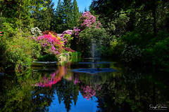 The Glades Garden Park - Surrey, BC (SonjaPetersonPh♡tography) Tags: cityofsurrey southsurrey surrey britishcolumbia bc theglades gardens thegladesgardenpark park plants flowers mothersday may nature paths trails ponds trees estate thedewolfs rhododendrons azaleas outdoors waterfountains water reflections waterreflections