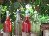 Bottles Of Colour! ('cosmicgirl1960' NEW CANON CAMERA) Tags: edenproject manmade conservation cornwall yabbadabbadoo