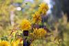 DSC_4003 (Oleg1961) Tags: tokina atx pro 100mm f28 d macro autumn flowers insects dew grass