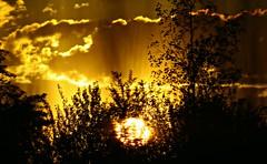 Fuego!!!!!!! (portalealba) Tags: zaragoza zaragozaparque aragon españa spain sunset sol atardecer portalealba canon eos1300d ocaso nwn