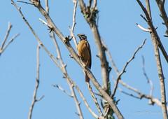 _DSC4946 (AngelPixCn) Tags: angepixcn birds farm feathers green hennopsriver nikond7100 pet southafrica tree wildlife wings centurion gauteng za