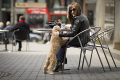 woman's best friend (mpmark) Tags: street photography streetphotography toronto downtown yorkville candid canon 5dmkiv 8514l funny gotcha doglovers getoutthere