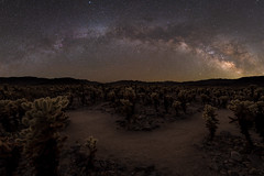 Cholla Garden Milky Arch (RyanLunaPhotography) Tags: california fuji fujifilm joshuatree nationalpark socal southerncalifornia xt2 astrophotography cactus desert landscape milkyway night nightscape ngc