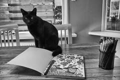 IMG_6977-bewerkt (burema.louisa) Tags: blackandwhite blackwhite cats cat tamron18200 canon canoneos canon1300d amateur kleurboekvoorvolwassenen colouringforadults