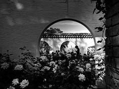 Send a bouquet of roses to... (明遊快) Tags: rose boy street lights shadows bw blackandwhite contrast park garden