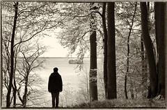* (elisachris) Tags: schweringersee mecklenburgvorpommern romantik romance romanticism sepia schwarzweis blackandwhite natur nature landschaft landscape bäume trees wald wood pentaxk50 pentax