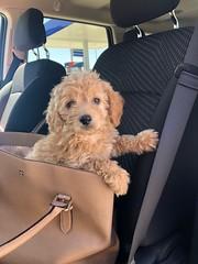 Penny's adorable Ellie!