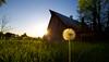 Wishes (KC Mike Day) Tags: wish wishes dandelion grass farm rural barn sun sunset glow