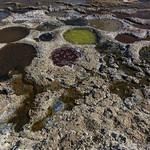 Tilapia nests at the Salton Sea thumbnail