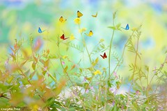 Butterflies (gusdiaz) Tags: photoshop photomanipulation composition composite digital art arte flores artistic artistico mariposas butterfly butterflies pastels pasteles colors colores
