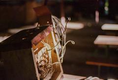 (oscarramirez_av) Tags: nikon f5 35mm analog film kodak ultramax gc400 mendoza argentina sol sun flor flower panta plant alambre wire metal cajon madera wood color