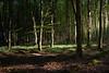 *** (Lee|Ratters) Tags: sony a7 voigtlander cv40 40mm f14 rowberrow warren somerset morning light tree leaves forest