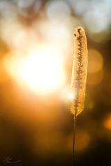 Cocoon (PhilPhotosity) Tags: nature naturelovers naturephotography getoutside wow awesome life falls tamborine mountain australia queensland nikon