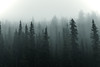 Silent Watchers (miss.interpretations) Tags: trees mystery intrigue scary eerie alone silence darkness snow fog mist forest rockymountainnationalpark rmnp colorado landscape treescape story narrative abstarct figures watchers mystique mountains adventures explore inspired rachelbrokawphotography moody canon6dmarkii